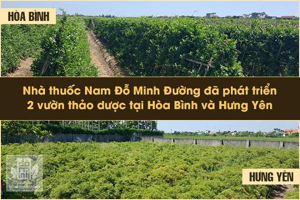 Vườn dược liệu riêng biệt của nhà thuốc Đỗ Minh Đường